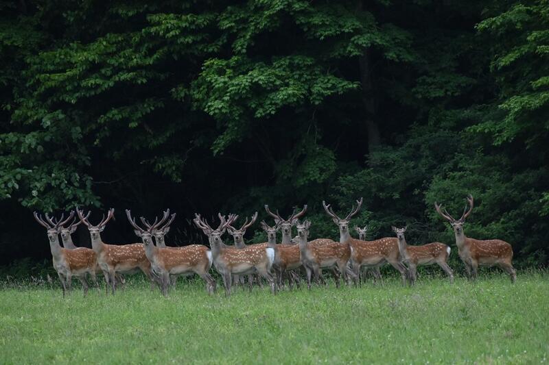 写真3牡鹿群差し替え.jpeg