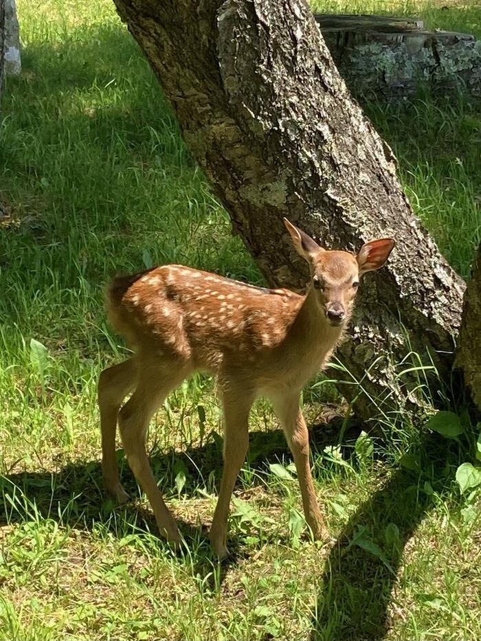 写真4小鹿.jpeg
