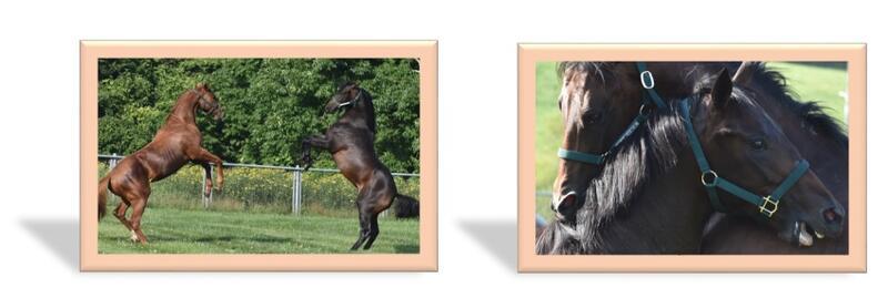 額の馬.jpg